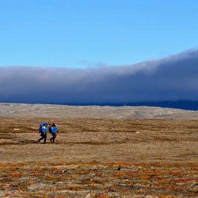 Polarforskare undersöker hur arktiska arter klarar klimatförändringar