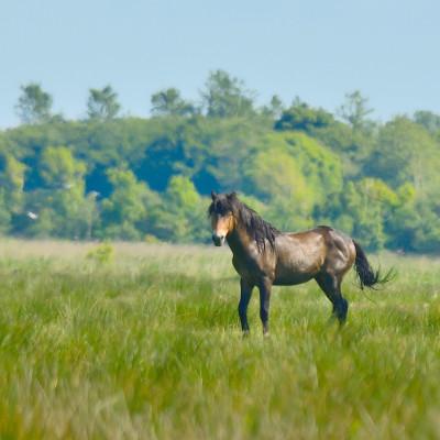 Rewilding: Hvor langt skal vi tilbage for at genoprette Danmarks oprindelige fauna, og hvem hører egentlig hjemme i dagens danske natur?