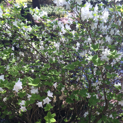 Savecore Nyhetsbrev - Glad sommar och lite tips inför hösten