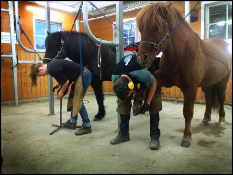 Sysselsättningen inom hästnäringen ökar - ridlärare är vanligaste yrket