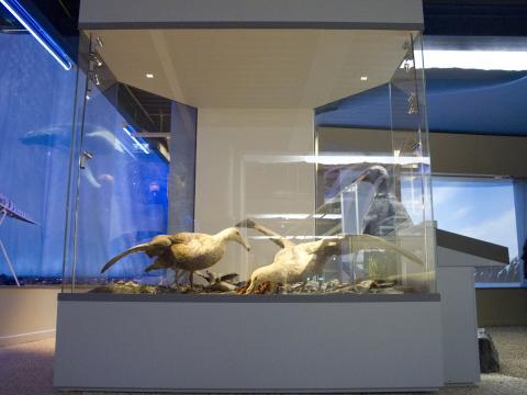 Fox Design presenterar Bild 2. I-LéD Maja det smarta sättet att belysa utställningar.