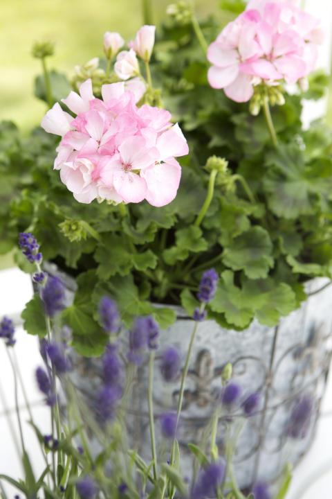 Vårens nya stilar från Blomsterlandet