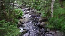 Bruka skogen med hänsyn till vatten