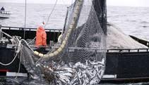 Retailer: Alaska salmon supply disappointing