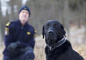 Charlie är Årets narkotikasökhund