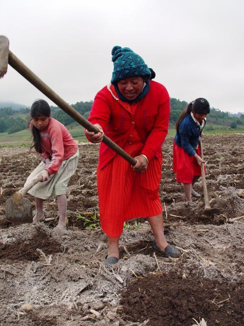 Bondekvinnor i Honduras