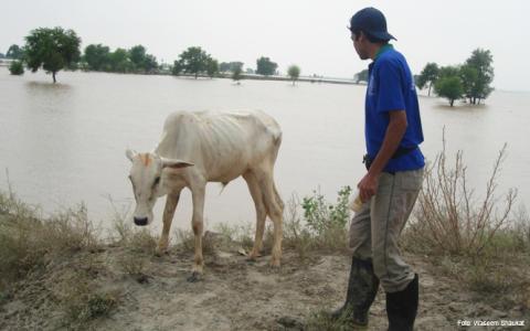Djurskyddet Sverige startar insamling till djuren i Pakistan
