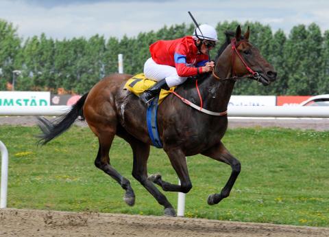 Fjorton hästar i Svenskt Derby