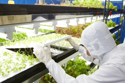 Toshiba Starts Vegetable Production at Toshiba Clean Room Farm Yokosuka — Aims to produce 3 million bags of vegetables a year —