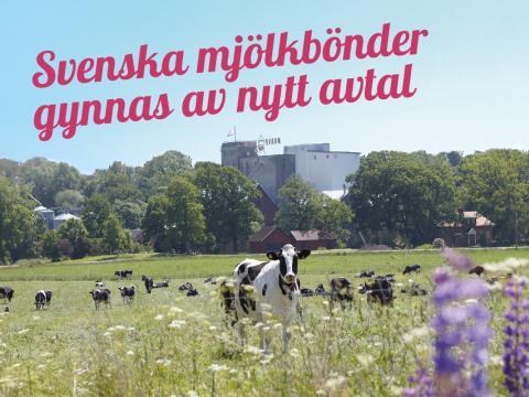 SIA Glass först ut: Köper mjölk direkt från svenska gårdar