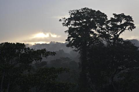 Solnedgang over Costa Ricas regnskov