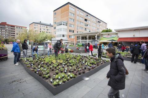 Boende skapar ett grönare torg i Hjällbo