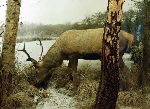 Kom og hør historierne om stenalderjægernes liv i Vedbæk.