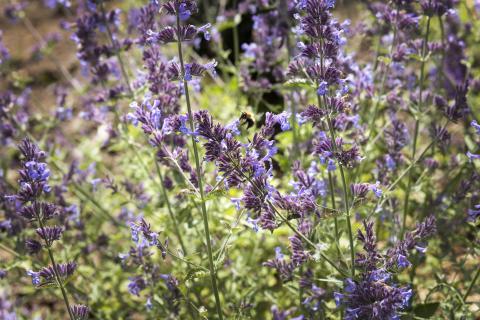 Blomsterlandet stödjer Naturskyddsföreningens kampanj Operation: Rädda bina