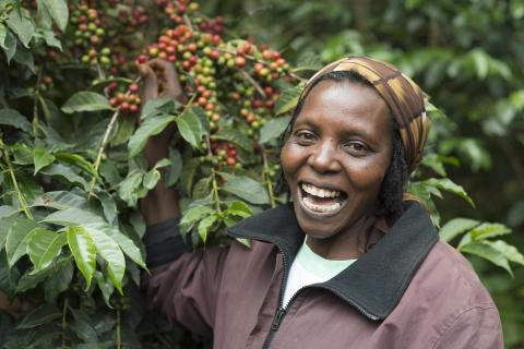 Fortsatt storsatsning på kvinnliga odlare i Östafrika