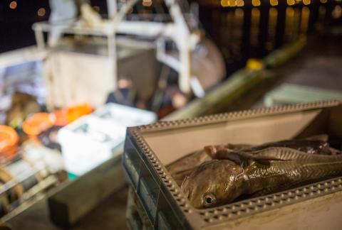 Östersjöns fiskekvoter för 2019 klara: Helhetsgrepp om felrapportering av lax