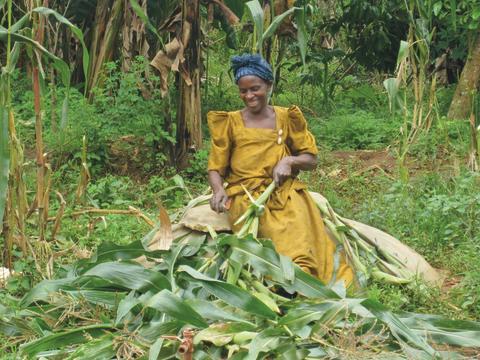 SLU Global. Harvest.