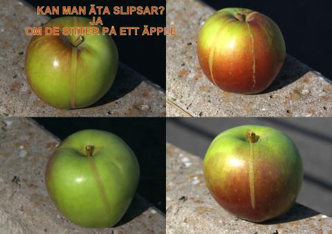 Kan man äta slipsar? Ja, om de sitter på äpplen
