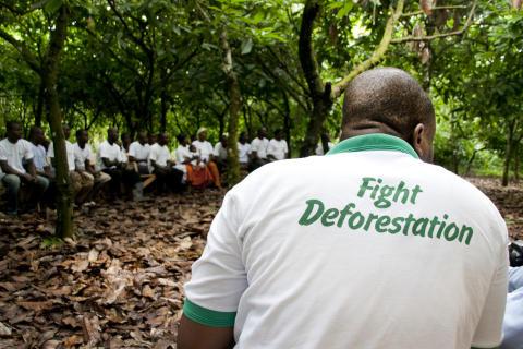 Fortsatt stark tillväxt för Rainforest Alliance - Framgångarna 2013 i siffror