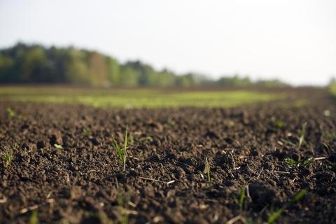 The Living Soil Forum, en femdagars konferens i Ytterjärna