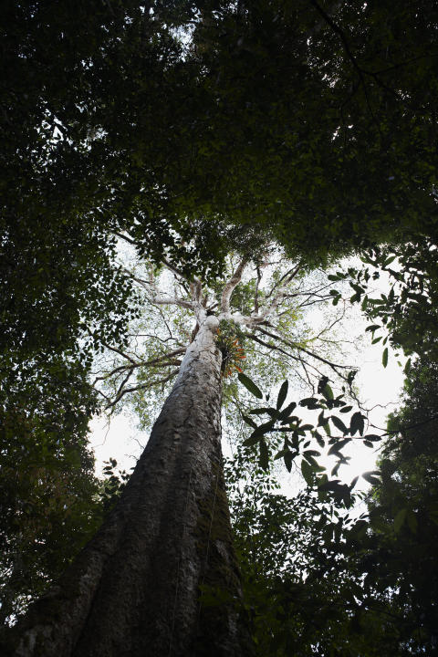 Trækroner i Costa Ricas regnskov
