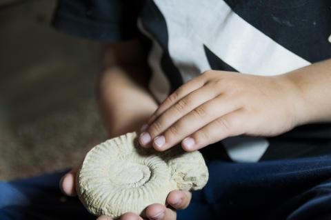 Geologins dag - ammonit