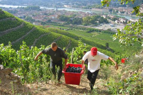 Delas_vingårdsarbete