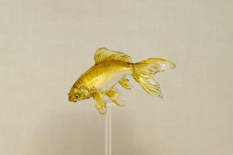 Ameshin_Gold Fish