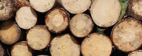 Nya perspektiv inför Skogsindustridagarna 2017
