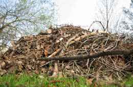 Bara rent trä i majbrasan