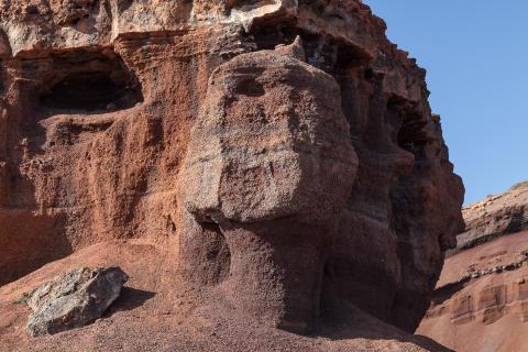 Canarian Sphinx