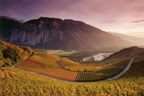 Erlebnis im Herbst: Mithelfen bei der Weinernte in der Schweiz