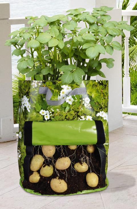 Nya trenden: Odla din egen mat inomhus.