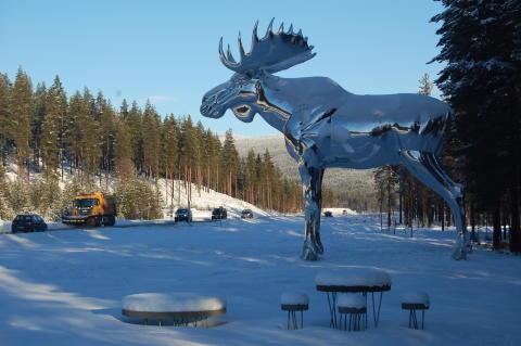 Größter Elch der Welt im Winter (2)