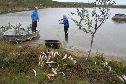 Jarfjordfjellet Guttorm og Helen Andersen