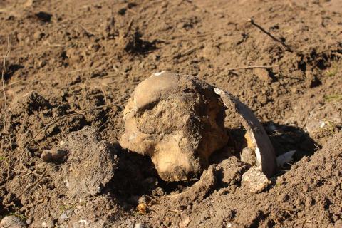 Kranie_ 4000 år grav_ CLOSE UP_ Frederikssund Museum Færgegården_ foto_ ROMU.jpg