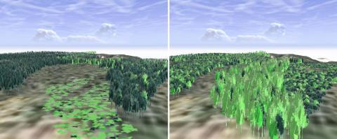 Ser fremtidens skog