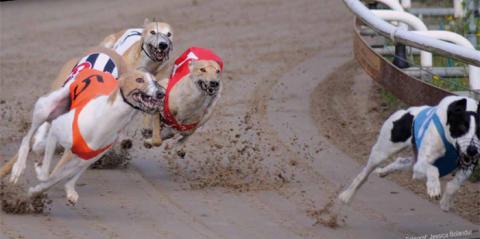 Europas snabbaste kapplöpningshundar till Borås den 2-10 augusti.
