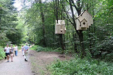 (X)Sites, Laura Lio Nests Houses Forest Art Path Darmstadt Germany