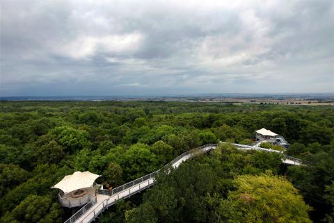 Nationalpark Hainich i Thüringen