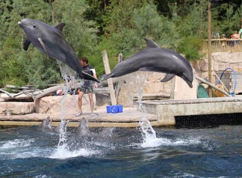 Delfinarien sollen geschlossen werden