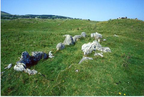 Primrose, Ireland, before excavation