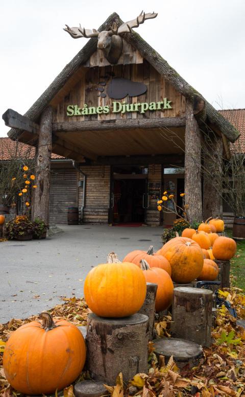 Skånes Djurpark under Höst i Djurparken