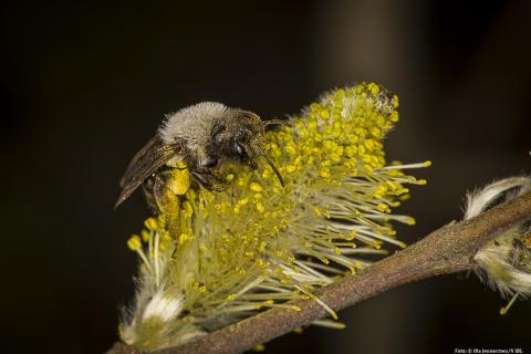 Hur klarar insekterna vintern?