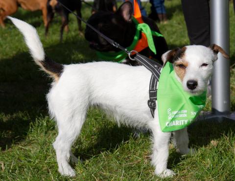 Över 250 hundägare promenerade för djurfria forskningsmetoder