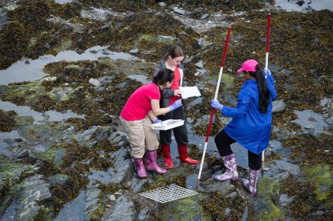 Tio projekt om marin pedagogik får dela på 2,5 miljoner kronor
