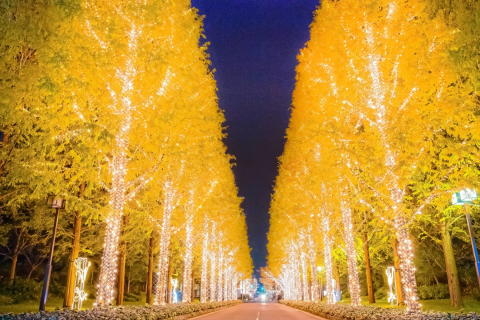 ROHM Illumination 2015, one of the largest illuminations in Kyoto, takes place with a melodic display of 800,000 lights until 12/25 (Fri.)