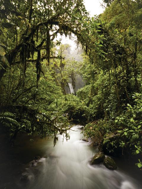 Bærekraftig utvikling for å hindre avskoging