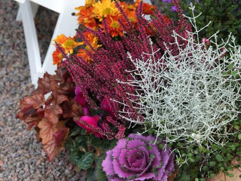 Höstfixa i trädgården - 10 trädgårdstips