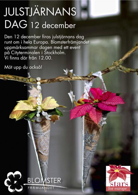 Julstjärnans dag!